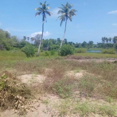 Vente d'un domaine de 5 hectares dans la commune de Ouidah, avec une belle vue sur l'Océan.