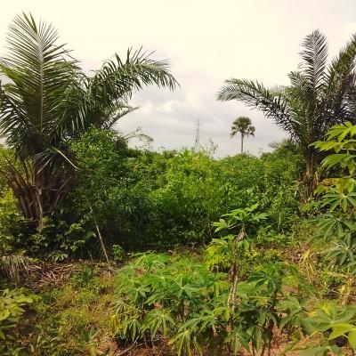 10 hectares exploitables à Adjohoun