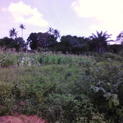 Plus de 200 hectares  de terres agricoles situés à Allada, localité d'Avakpa- Africa Immo.