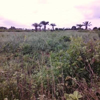 Domaine – Hevié Dossounou- Africa Immo.