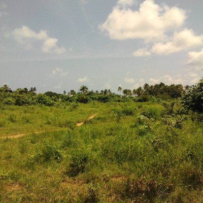 Domaines agricoles à Tchaourou Africa Immobilier Benin.