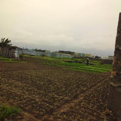 Un hectare à Fidjrossè.