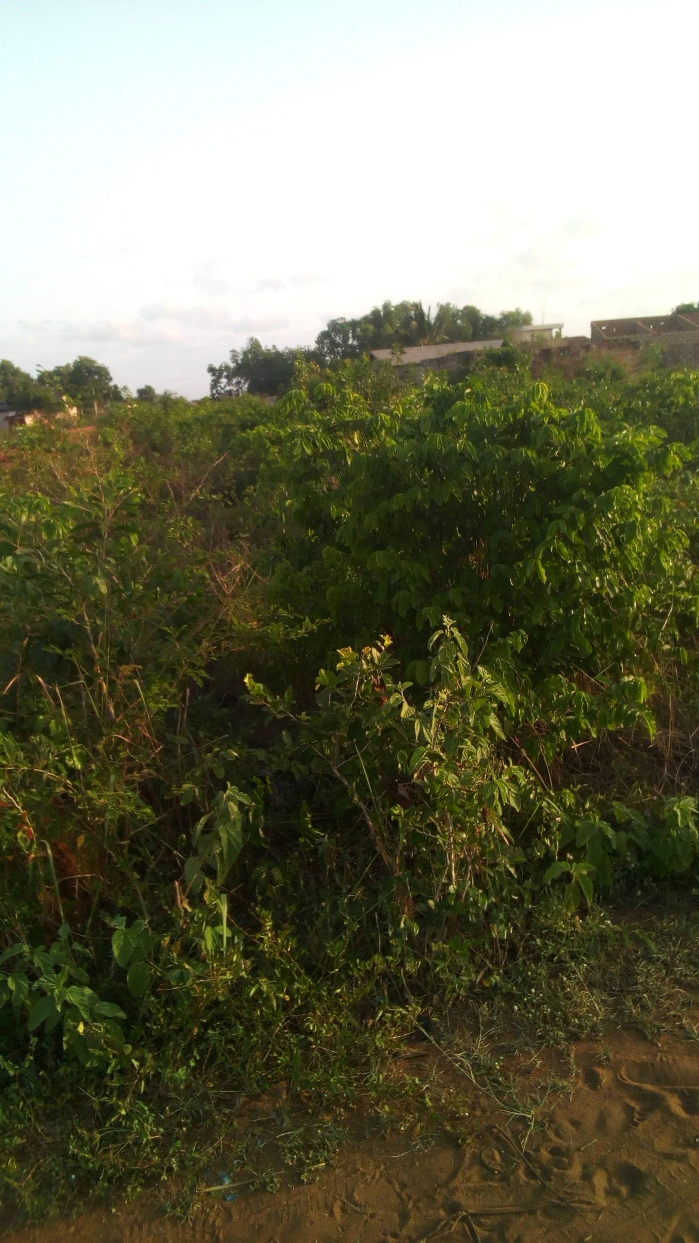 Immobilier Tourou (Bénin) : 02 parcelles loties et recasées de 500 m² chacune à Tourou, proche de la cour d'appel de Parakou.