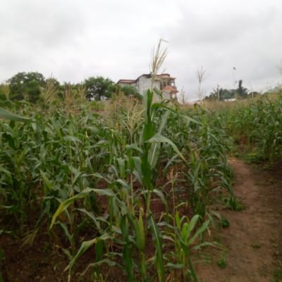 Parcelle de 500 m² lotie à Adjagbo.