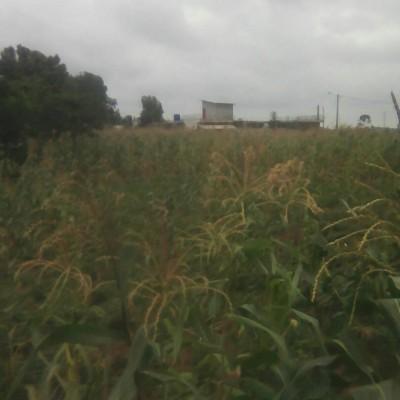 Domaine de plus de 50 hectares à Agongbè guèvié.