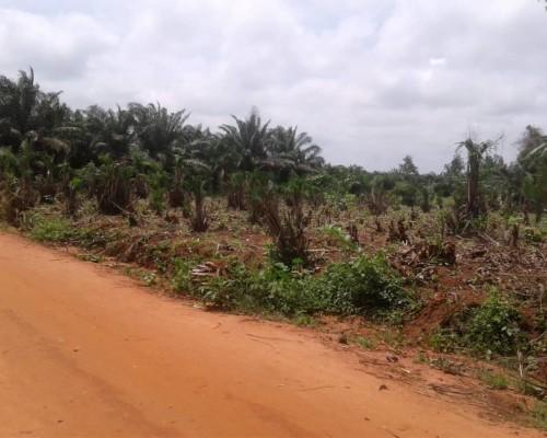 Parcelle de 500 m² Habitable en vente à Adjagbo, arrondissement d'Akassato.