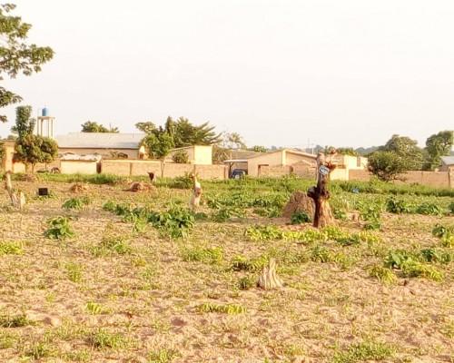 Immobilier Parakou (Bénin) : des parcelles près du terrain de sport de Barérou