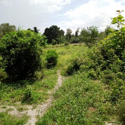 Domaines-Comé-800 m de la voie Comé-Lomé -Africa immo Bénin.