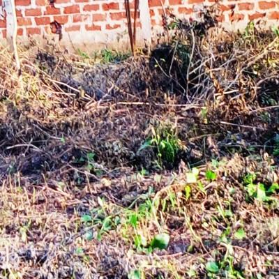 Parcelles loties Hêvié-Africa immo benin