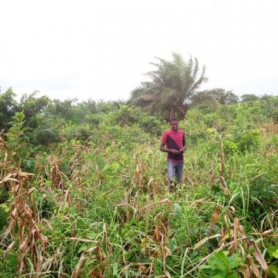 Parcelle-Sèdjè Denou Africa Immo.