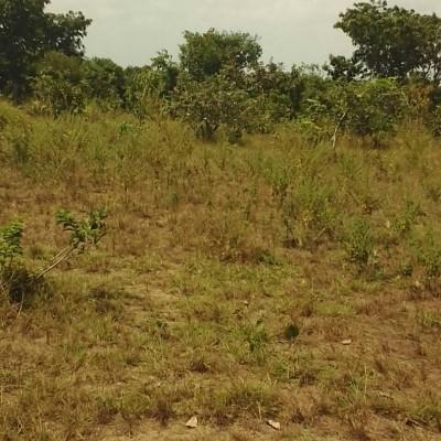Quatre parcelles à Zè plaque ADJRAKO-Africa Immo Bénin