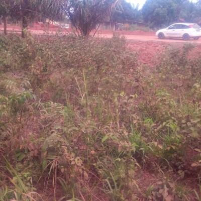 Quinze parcelles à Zè plaque Adjrako-Africa Immo Bénin