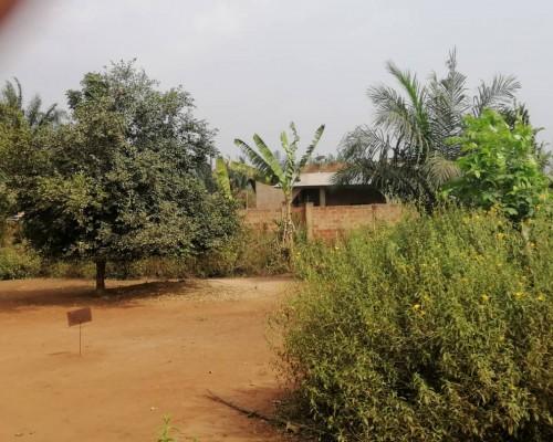 Immobilier Abomey-Calavi : Parcelle habitable près des logements sociaux de Ouèdo