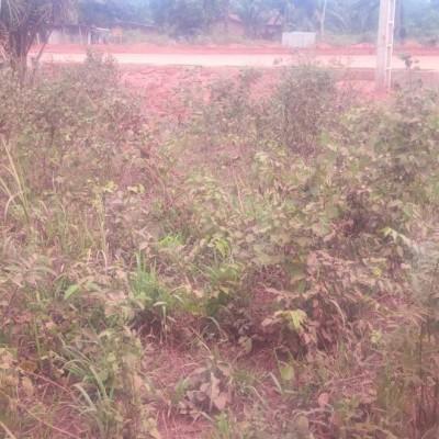 Trois parcelles non loties à Kpahou Akadjame-Africa Immo.