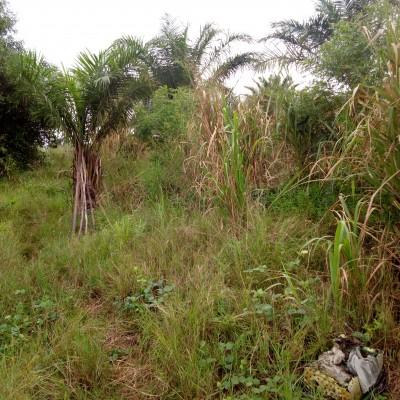 Parcelle de 500 m² sise à Kétou, localité de Iffeoute à 3 km du goudron.