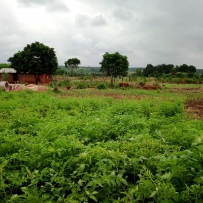 Parcelles loties-Djérégbé-Africa Immo.