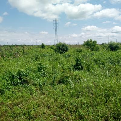 Domaines agricoles à Parakou