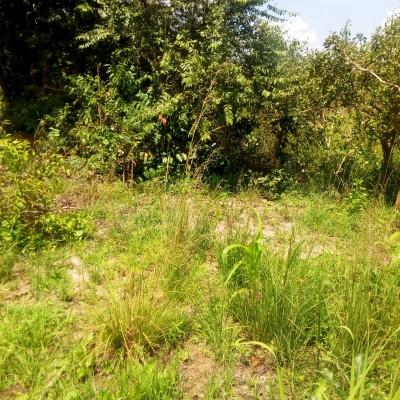 Trois (03) hectares de terres agricoles à Sè à 500 m du goudron