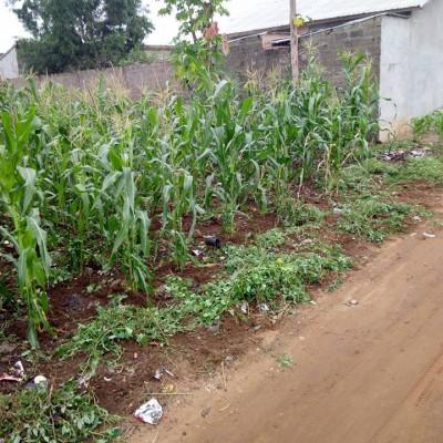 06 Parcelles de 400 m² chacune à Ouèdo Adjagbo