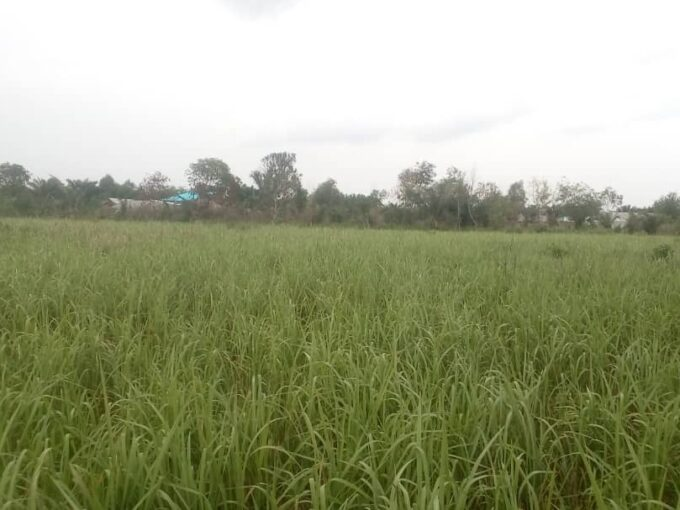 02 Parcelles relevées à l'état des lieux à Abomey-Calavi