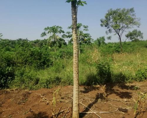Plus de 100 hectares de terre fertile cultivable à sè dans la ville de comè dans le Mono.